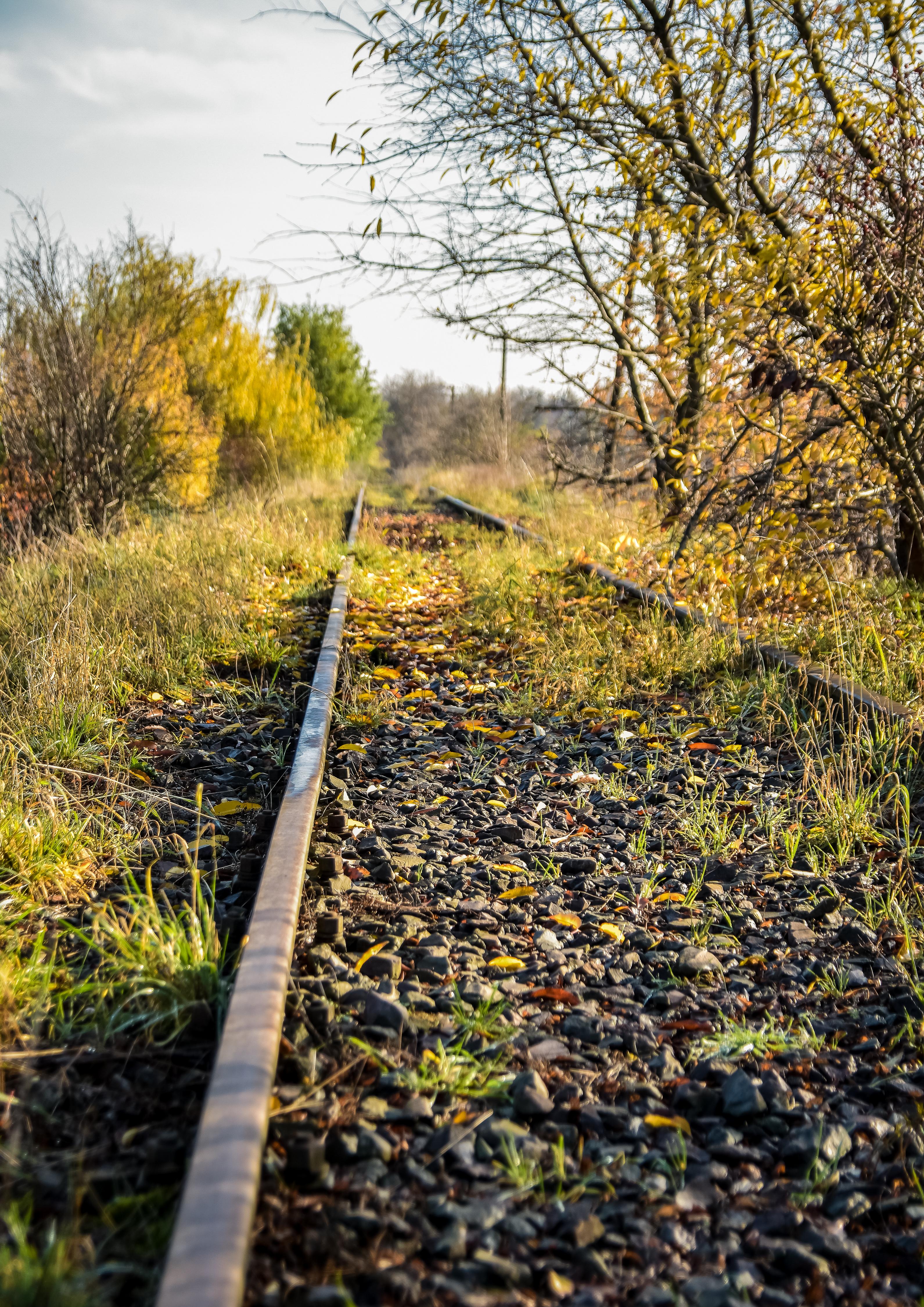 Linia kolejowa nr 363 Rokietnica – Międzychód. Tory porośnięte trawą i drzewami