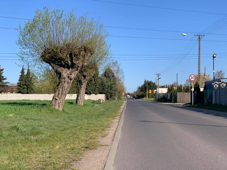 Na zdjęciu widoczna ulica Poznańska w Kiekrzu i dwiema wierzbami na poboczu. W tle widoczny znak ograniczenia prędkości 30 km/h oraz budynki.