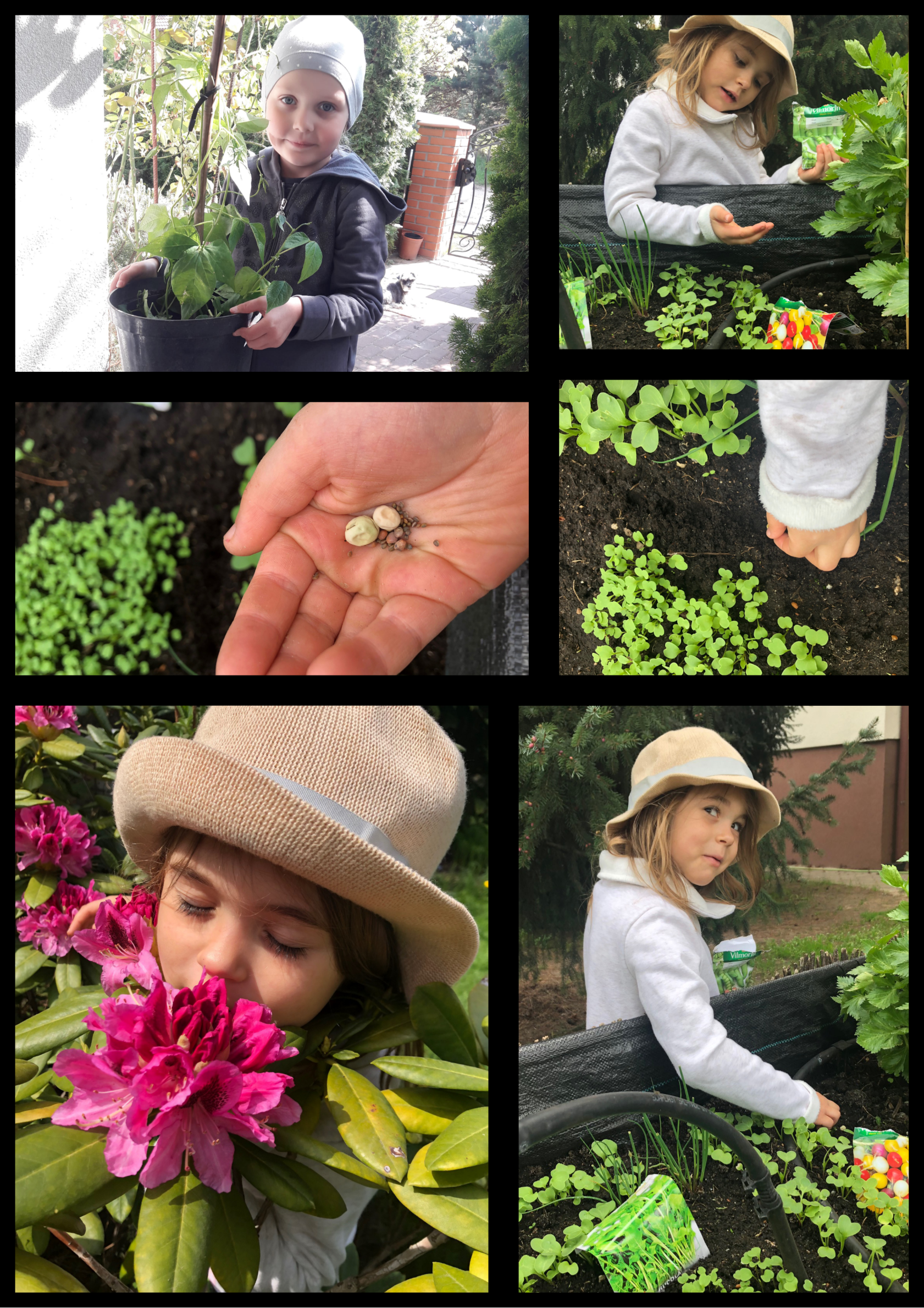 Na kolażu 6 zdjęć dziewczynki w ogrodzie. Sieje warzywa i wącha kwiaty.