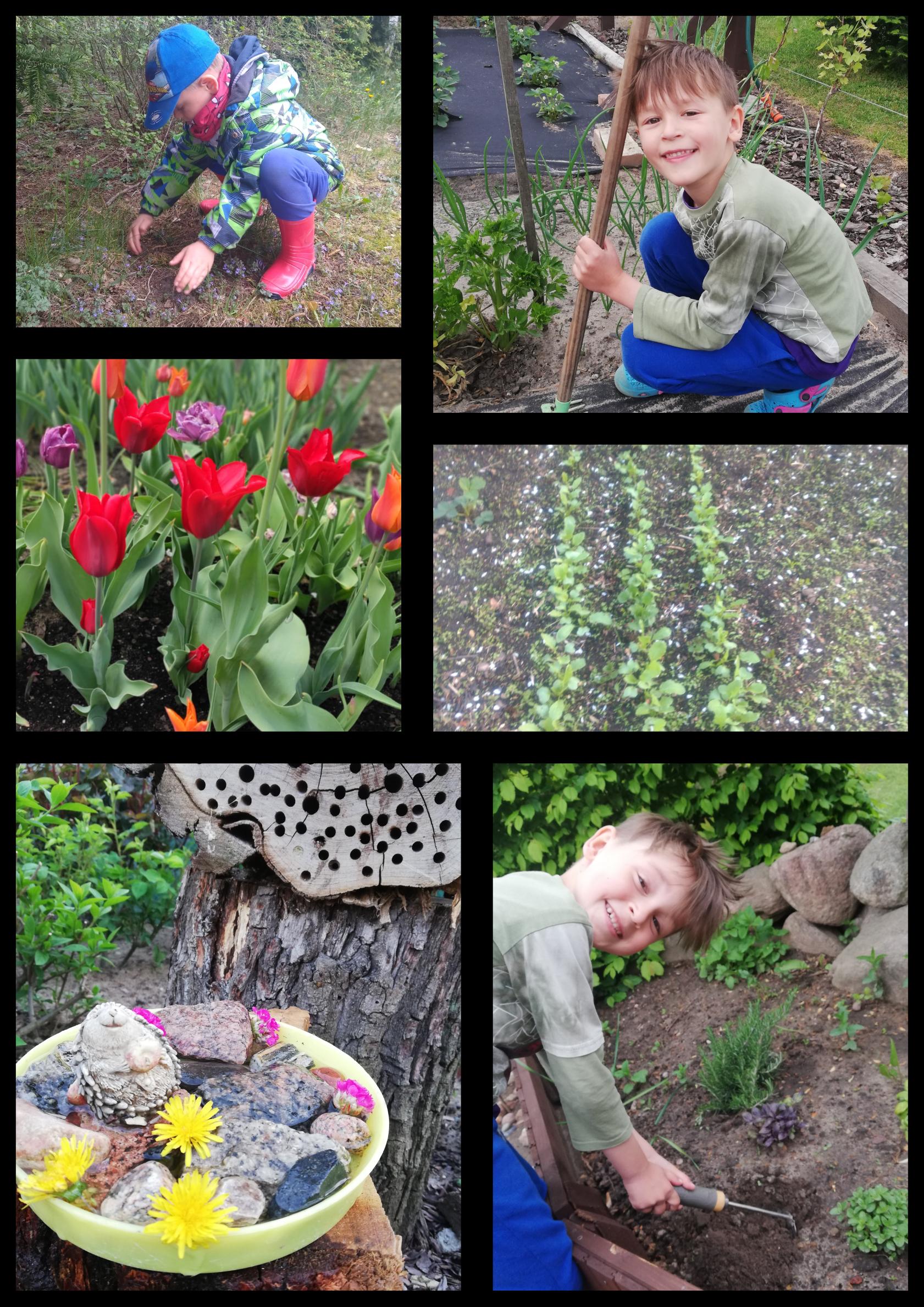 Na kolażu 6 zdjęć chłopca w ogrodzie. Sieje warzywa i wykonuje inne prace.