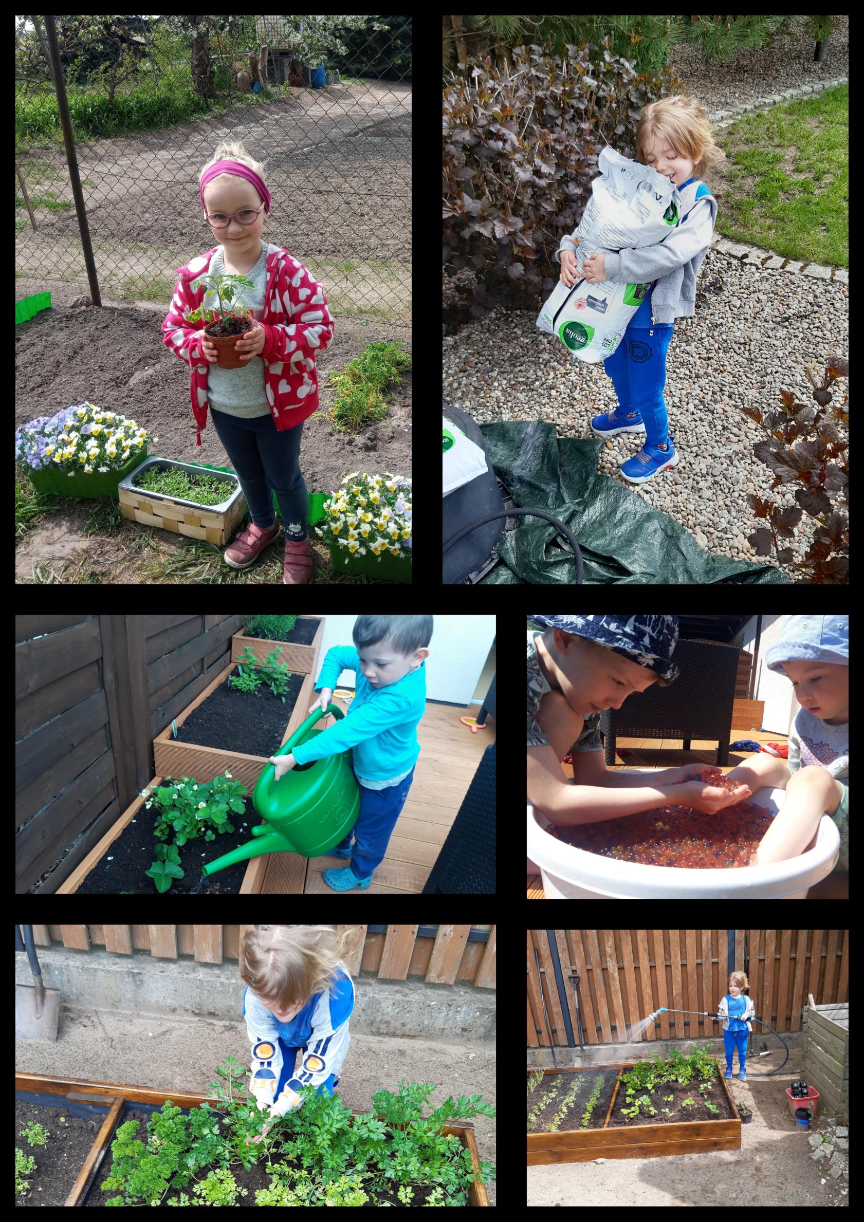 Na kolażu 6 zdjęć dziewczynki i chłopca w ogrodzie. Trzymają w rękach sadzonki, ziemię, sadzą i podlewają rośliny.