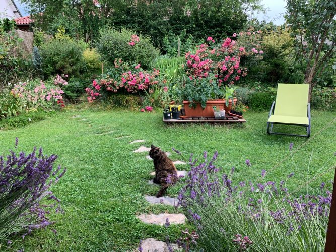 Na zdjęciu widać ogród z wytyczoną kamienną ścieżką, przystrzyżoną trawą, licznymi kwiatami, lawendą, ozdobnymi krzakami i leżakiem.