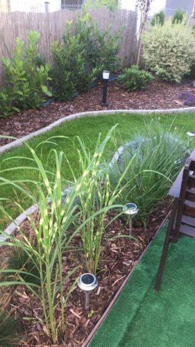 Na zdjęciu widać ogród zagospodarowany roślinnością, przystrzyżona trawa, posadzone trawy i krzewy ozdobne, między roślinami umiejscowione są niskie lampy.